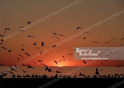 renee_scheltema_travel_sunset_birds